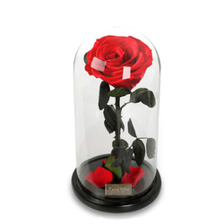 Category: Dropship Party Supplies, SKU #1248723, Title: Para Ella Preserved Fresh Rose Flower with Fallen Petals in Glass Dome on a Wooden Base as Gift for Valentine's Day, Anniversary, Birthday , Wedding