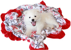 Category: Dropship New Arrivals, SKU #500-154 RSFJB, Title: Luxurious Plush Pet Blanket Red Snowflake Jumbo Size
