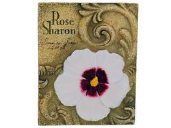 Category: Dropship Religious, SKU #BG124-24, Title: 4pk rose of sharon 870004 ( Case of 24 )