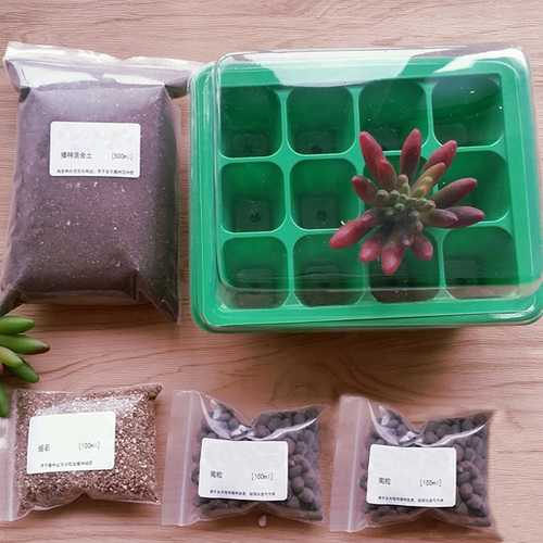 9 Holes Plastic Seedling Box Planter with Mixture Soil Kit for Succulent Plant Sowing