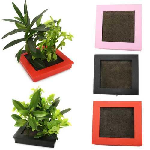 Soilless Culture Nutrition Carbon Mud Sponge Plant Growth Flower Pot with Photo Frame