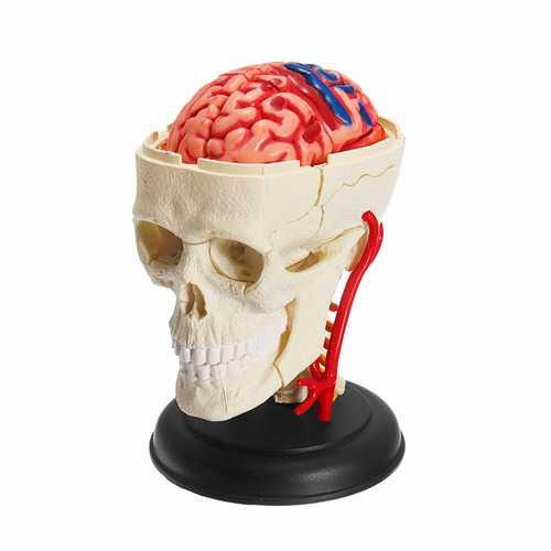 4D MASTER Puzzle 39pcs Assembling Skull Brain Neuroanatomical Model Toy