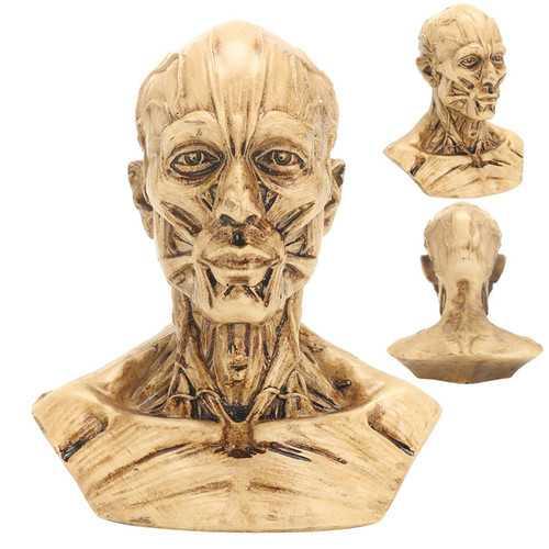 "4"" 10cm Human Anatomical Anatomy Skull Head Muscle Bone Medical Model Home Decor"