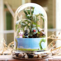 Cylinder Shaped DIY Moss Micro Landscape Glass Bottle Succulent Plants Vase Home Decoration