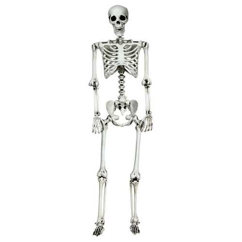 5.4ft Halloween Skeleton Life Size Realistic Full Body Hanging - Color: White