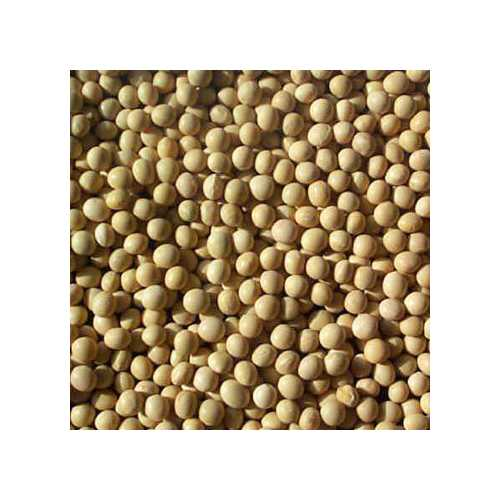 Beans Soybeans (1x25LB )