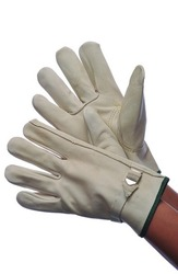 Case of [120] Leather Cowhide Driver Gloves Large