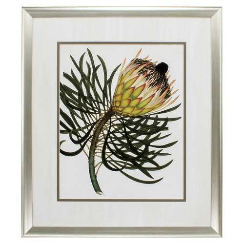 "26"" X 30"" Aged Silver Frame Antique Protea IIi"
