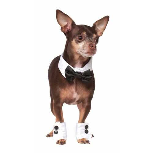 Pet Tuxedo Bowtie And Cuff Set Small-Medium