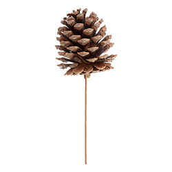 Pinecone Pick Natural - 9.75 Inches