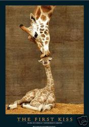 Giraffe The first kiss