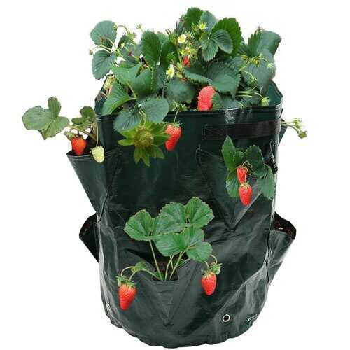 8 Pockets Potato Strawberry Plant Bag