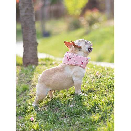 2 Colors Pet Dog Ice Scarf
