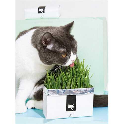 100Pcs/Bag Cat Grass Seeds