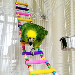 10 Steps Wooden Swing Flexible Climb Ladder Small Pets Colorful Bird Parrot Toys