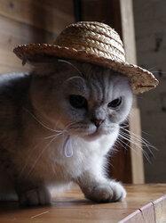 Pet Dog Cat Fashion Hawaii Style Photograph Props Hat