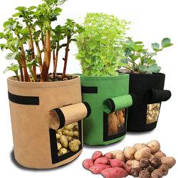Tomatoes Potato Grow Bag