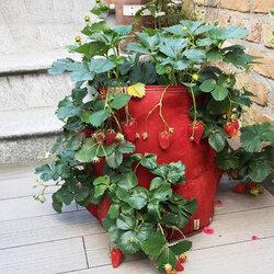 Multi Pockets Strawberry Planter Bag