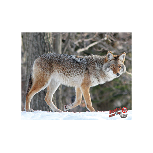 Duramesh Archery Target Coyote Bear 25 in.x 32 in.
