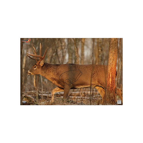 Birchwood Casey EZE-Scorer Whitetail Target 23x35in 2pk
