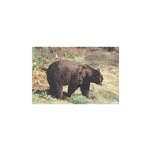 Delta McKenzie Tru-Life Target Bear