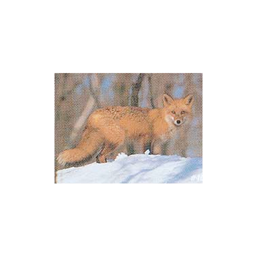 Delta McKenzie Tru-Life Target Fox
