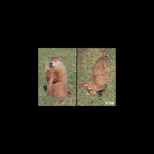 #108 Woodchuck & Rabbit Target