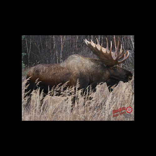 Duramesh Archery Target Moose 25 in.x 32 in.