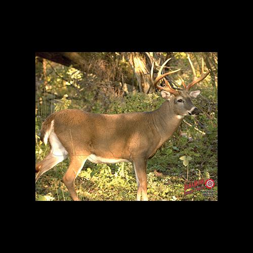 Duramesh Archery Target Whitetail 3 25 in.x 32 in.