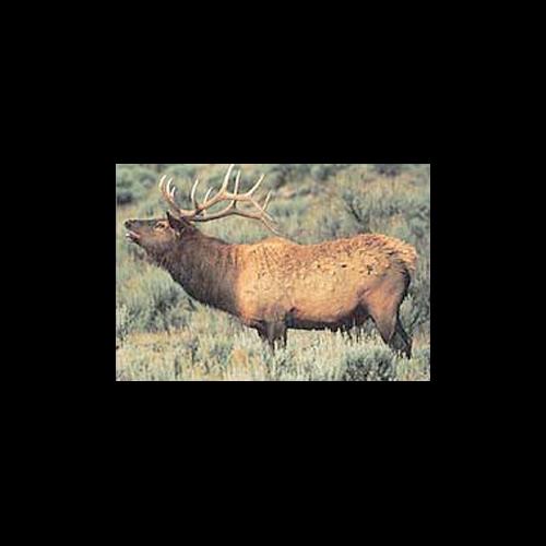 Delta McKenzie Tru-Life Target Elk