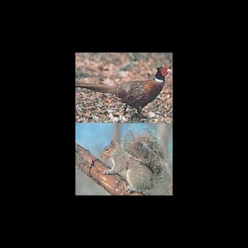 Delta McKenzie Tru-Life Target Pheasant/Squirrel