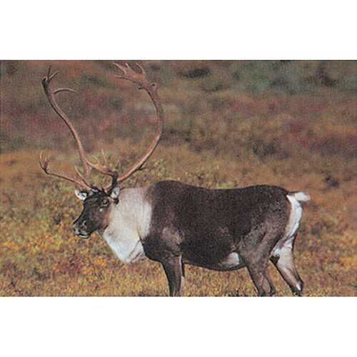 Delta McKenzie Tru-Life Target Caribou