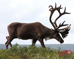 Duramesh Archery Target Caribou 25 in.x 32 in.