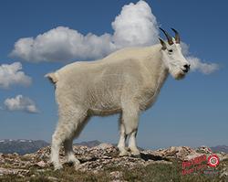 Duramesh Archery Target Mountain Goat 25 in.x 32 in.