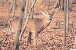 Delta McKenzie Tru-Life Target Whitetail Deer