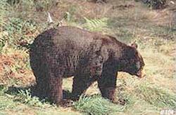 Delta #104 Black Bear Target