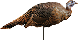Spring Fling Hen Turkey Decoy