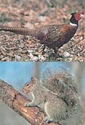 Delta #117 Pheasant/Squirrel Target