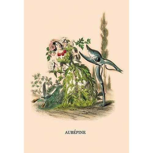 Aubepine (Paper Poster)