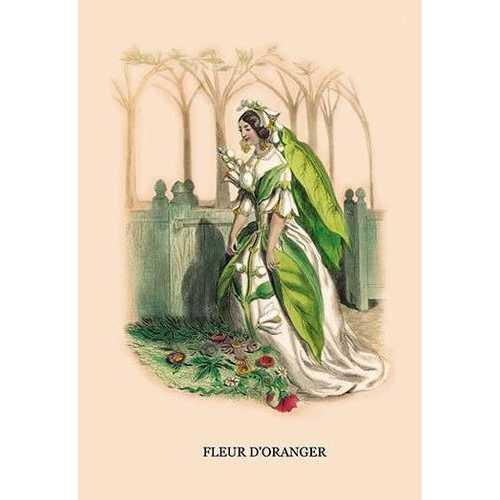 Fleur d'Oranger (Paper Poster)
