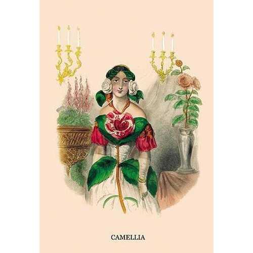 Camellia (Paper Poster)