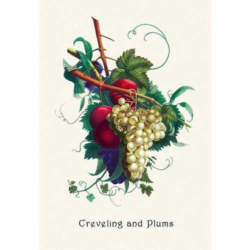 Creveling Grapes and Plums (Paper Poster)