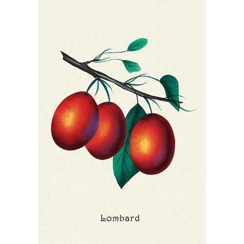Lombard Plums (Paper Poster)