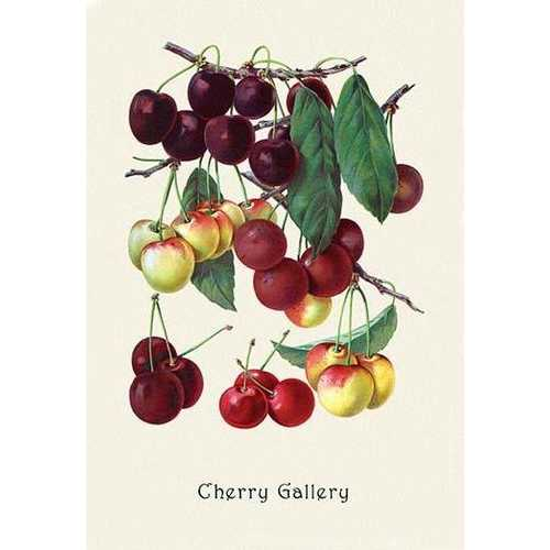 Cherry Gallery (Paper Poster)
