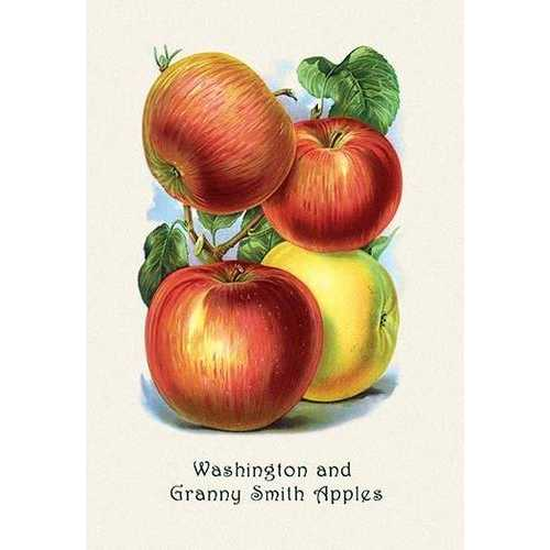 Washington and Granny Smith Apples (Paper Poster)