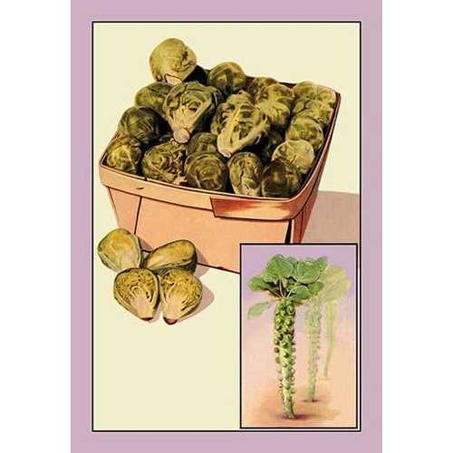Brussel Sprouts (Paper Poster)
