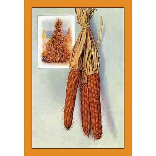 Corn (Paper Poster)