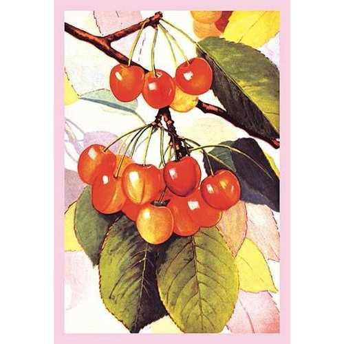 Cherries (Paper Poster)