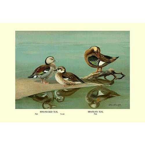 Ring-Necked and Brazilian Teals (Fine Art Giclee)