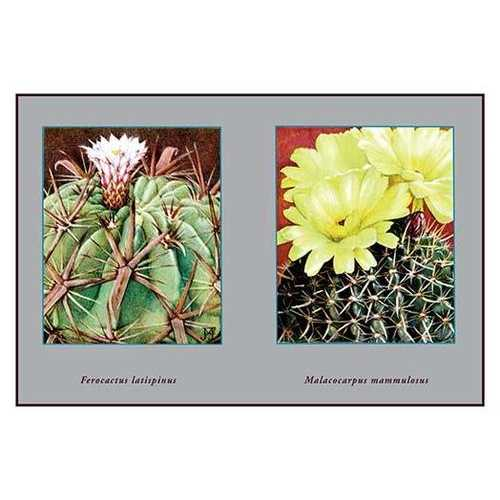 Ferocactus Latispinus (Paper Poster)